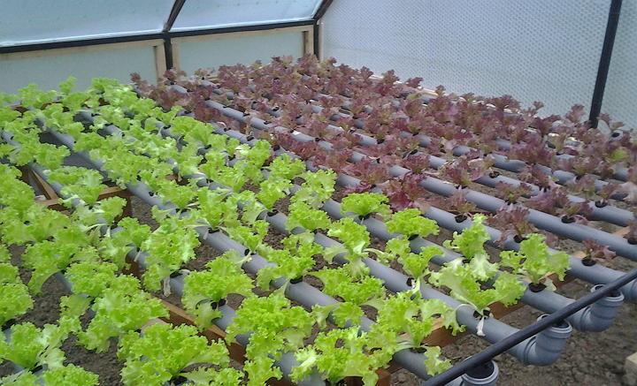 Теплица позволяет круглогодично выращивать овощи и фрукты на продажу